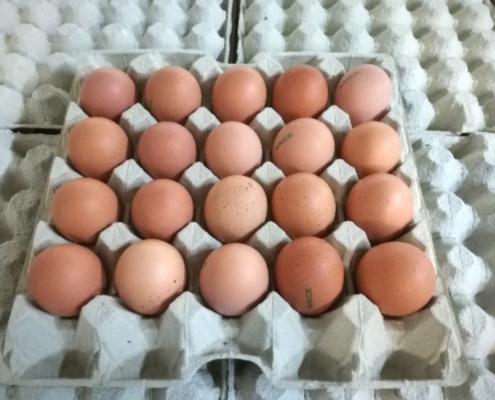 Čerstvá vejce 20 ks