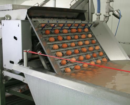 Vařená loupaná vejce pro gastronomii