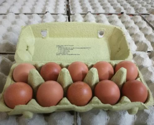 Čerstvá vejce 10 ks
