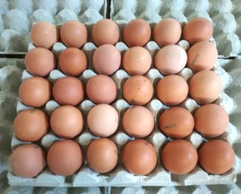 Čerstvá vejce 30 ks